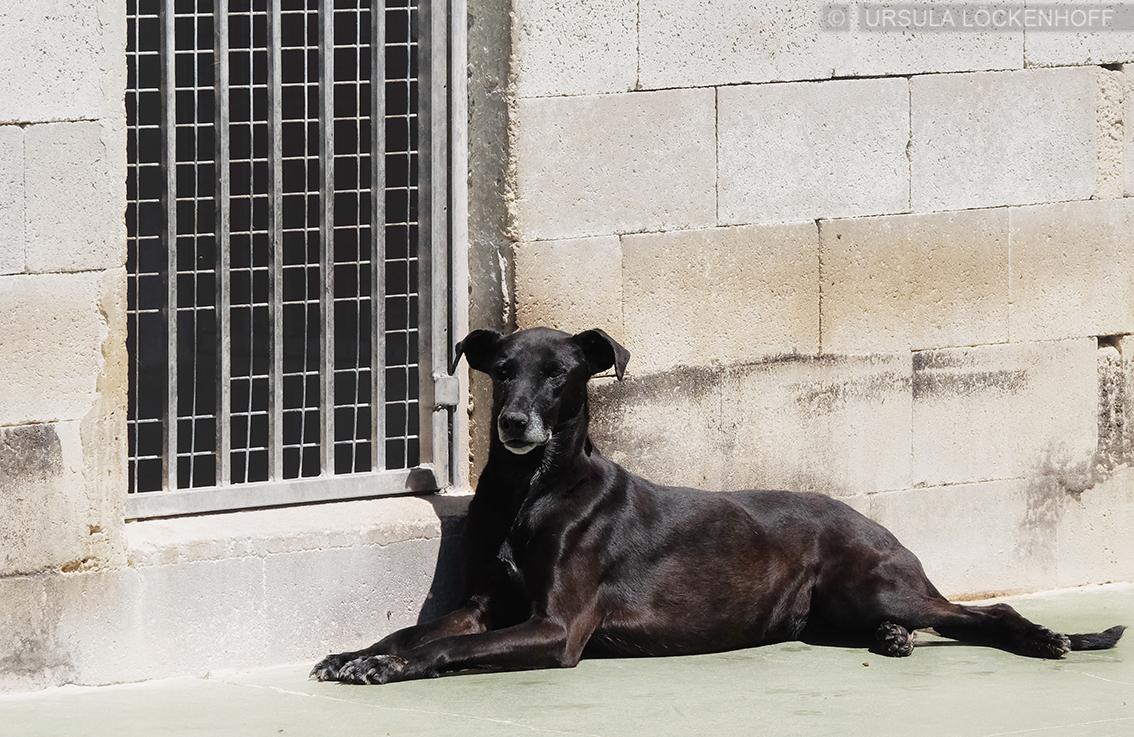 Balti – Bruder von Herrn Rossi (Tierheim Ciudad Animal Madrid) (2018)
