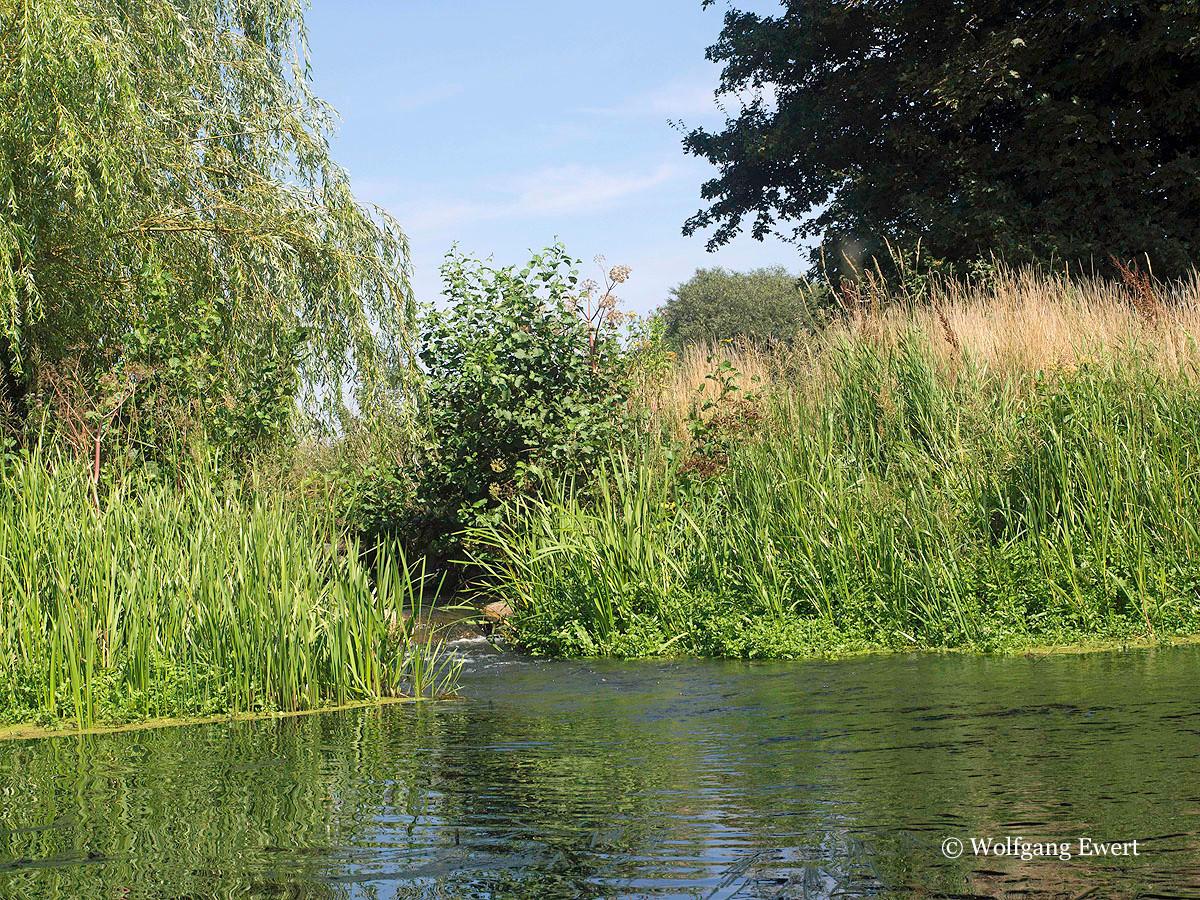 Fischpass am Wehr                --                      Foto: W. Ewert