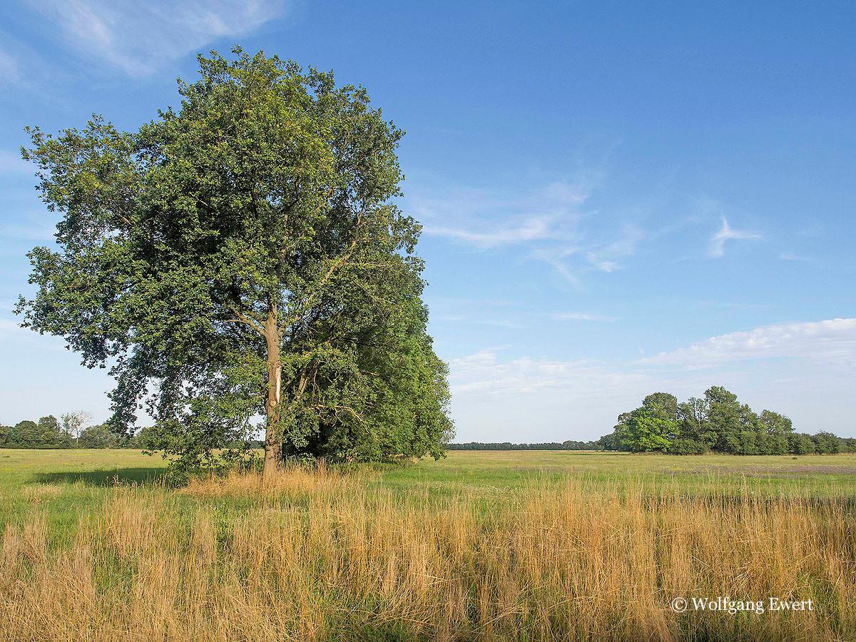 Wiesenlandschaft                   --                           Foto: W. Ewert