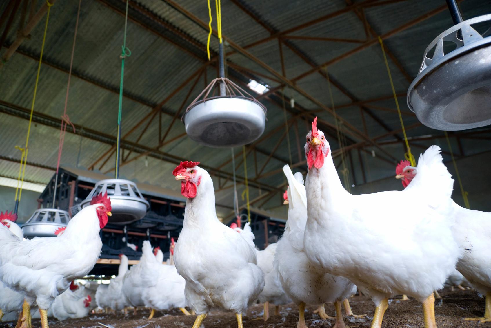 Poultry Industry R E M International Mechanics