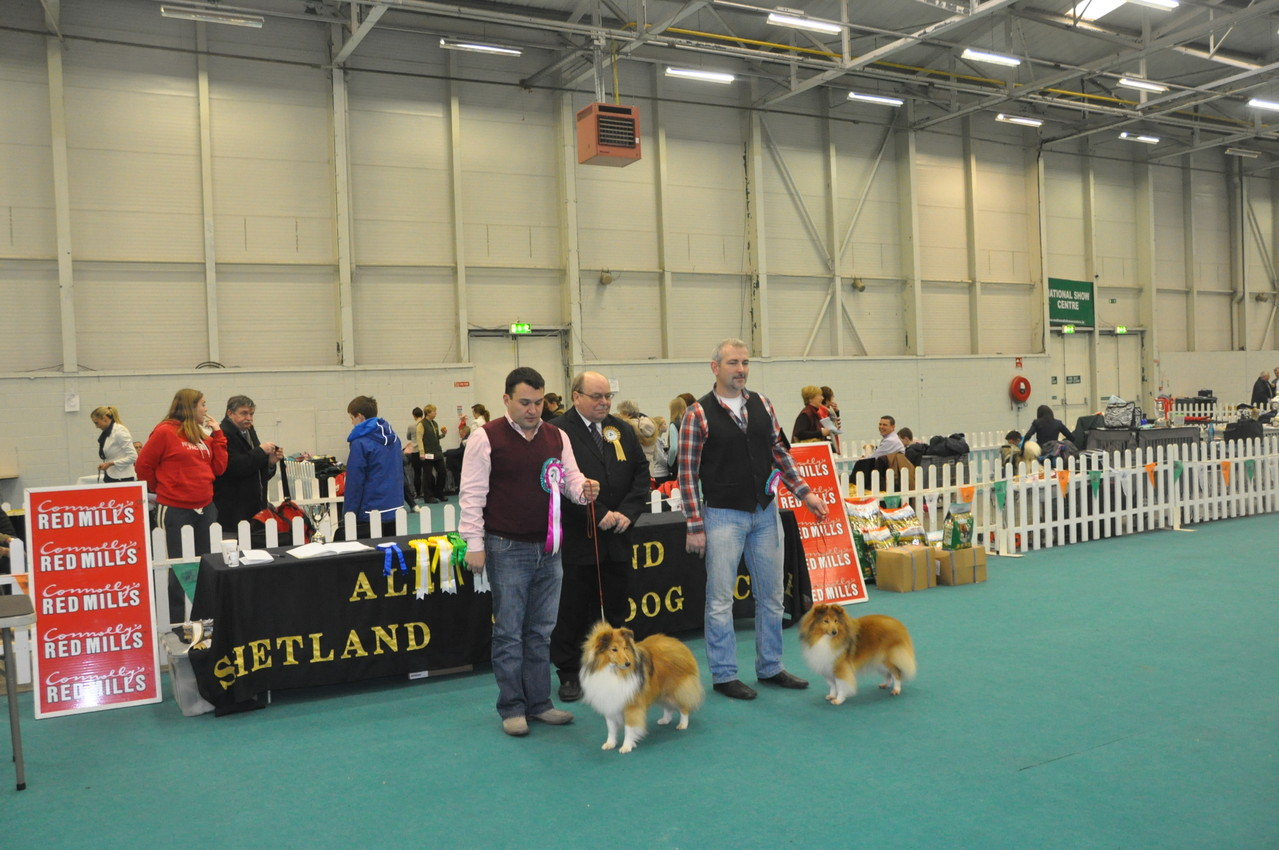 Left : BIS, Best Dog Ch Irish Legend of Navarrem Righ ( Mr E & Mr P Castillo & Fortune): RBIS, Best Bitch   CH TOORALIE'S EDITON DE LUXE AT FEARNACH JNR CH (Damian D Mc Donald)