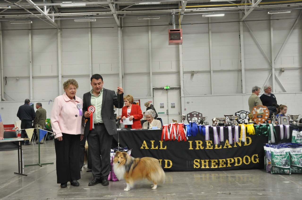 Reserve Best Dog JUN CH, CJW 12 IRISH LEGEND OF NAVARREM (Mr E & Mr P Castillo & Fortune)