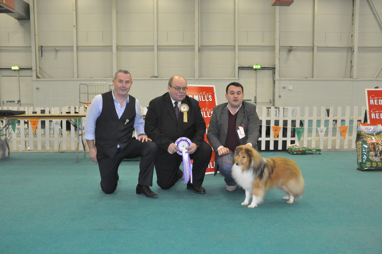Best in Show Ch Irish Legend of Navarrem Judge : Mr C Dowson ( UK)