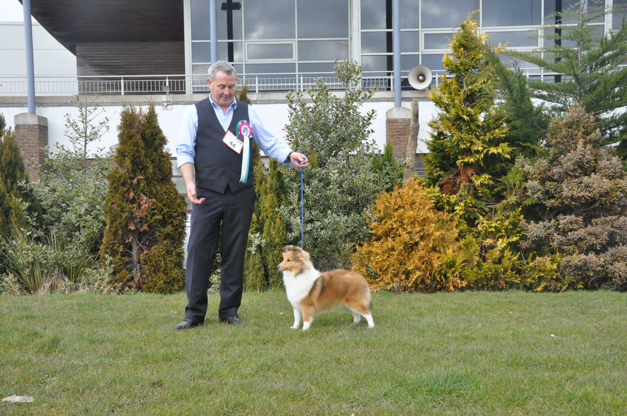 Best Puppy in Show   RICHMAUS PERFECT PICTURE OF NAVARREM (Mr E & Mr P Castillo & Fortune)