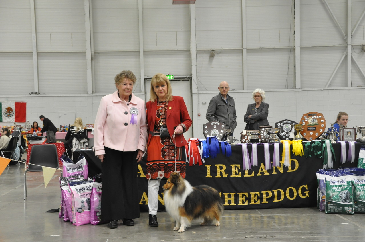 Best Dog CH SEVENOAKS GOLD EDITION  (Joe & Brenda Doyle)