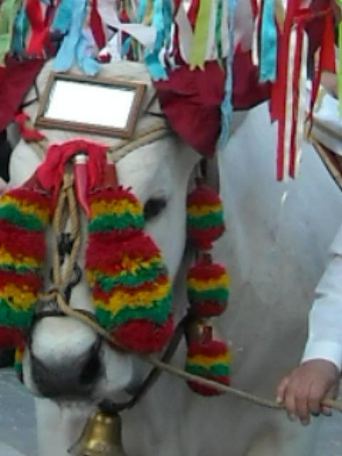 La festa del bue di San Zopito Loreto Aprutino (PE)