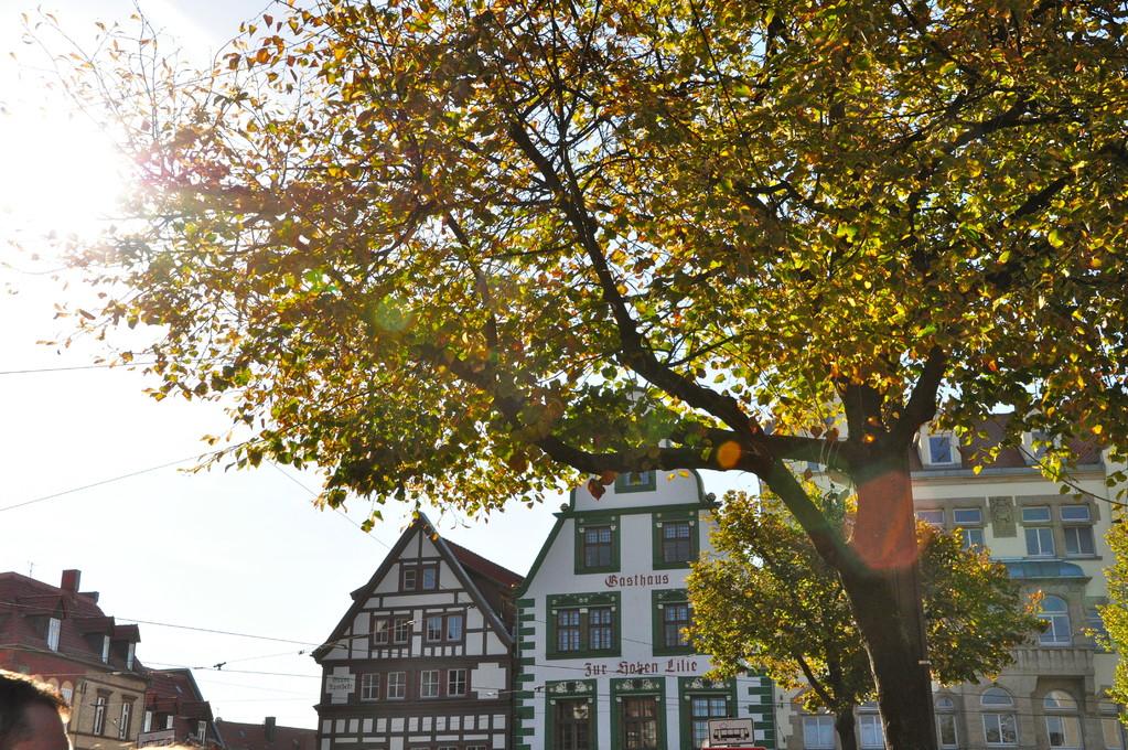 Impressionen aus Erfurt