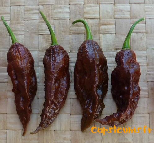 10 graines Pepper Piment-hongrois Noir