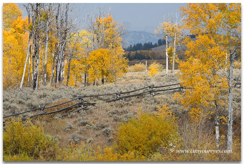 Herfstkleuren even buiten Jackson Hole langs Highway 89