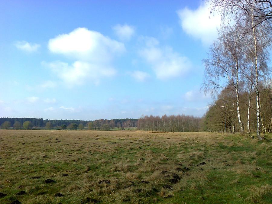 ebenso gibt es hinterm Wald freien Blick über Wiesen.