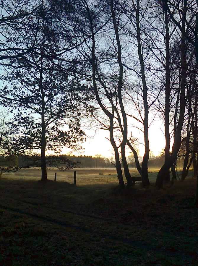 Die Barker Heide im Morgenlicht,