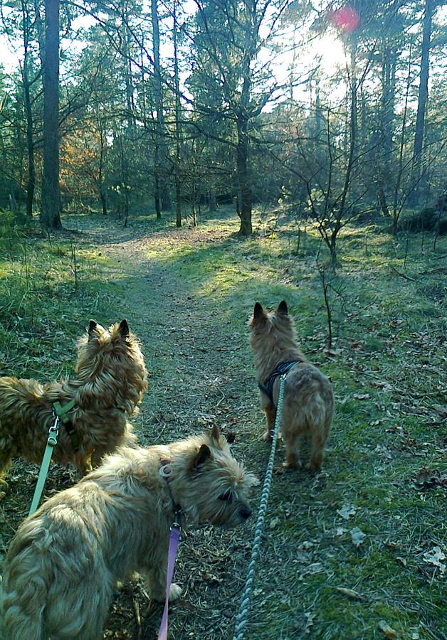 Erst geht es durch den Wald,