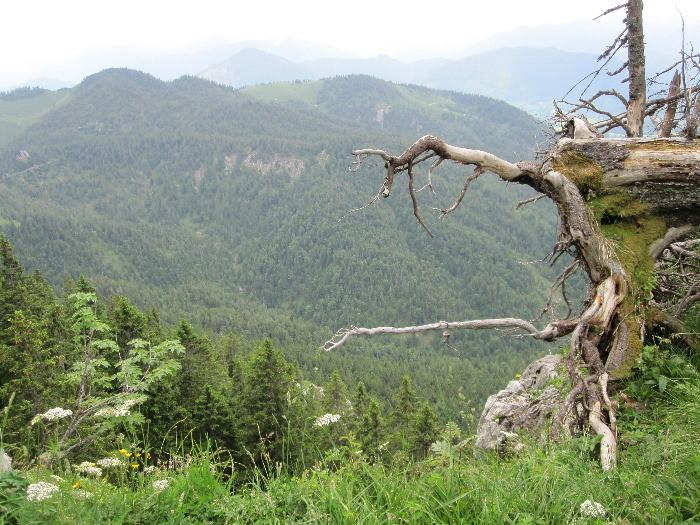 Ausblick halbe Strecke Benediktenwand 2012