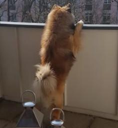 Bino beobachtet interessiert das neue Revier