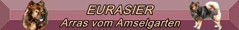 """ARRAS  """"Arrasino""""  ist der Stammvater der Eurasier von Arrasino-Austria"""