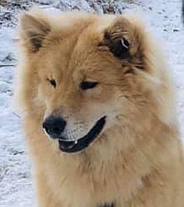 CITO als Junghund