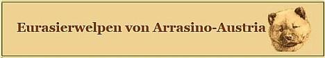 alle Infos rund um unsere Eurasierwelpen