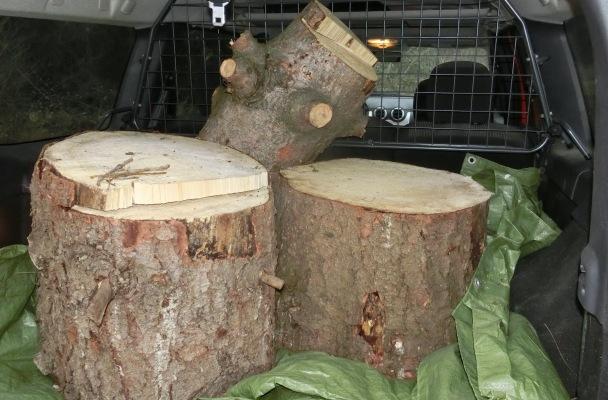 """Wir denken POSITIV ... deshalb wurden schon Holzstämme für die Gestaltung des Welpengartens besorgt - ein bisschen """"verrückt sein"""" ist schön!"""