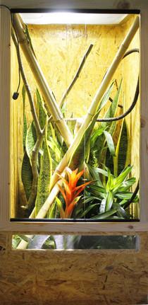 Aufzuchtterrarium Terrarium Phelsuma grandis Grosser Madagaskar Taggecko