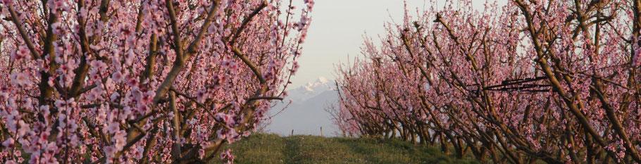 quenin chez signiel : des sujets liés au milieu agricole et rural
