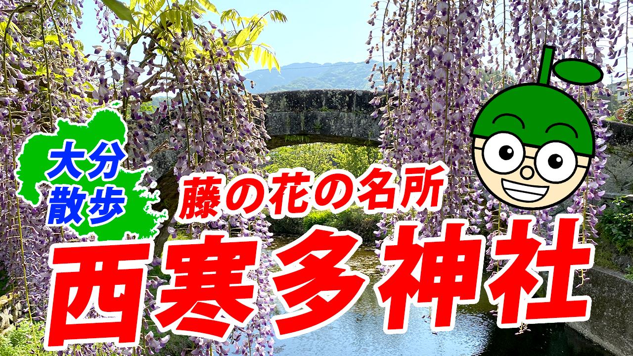 【大分散歩】藤の花の名所を大分ローカルタレントが歩く