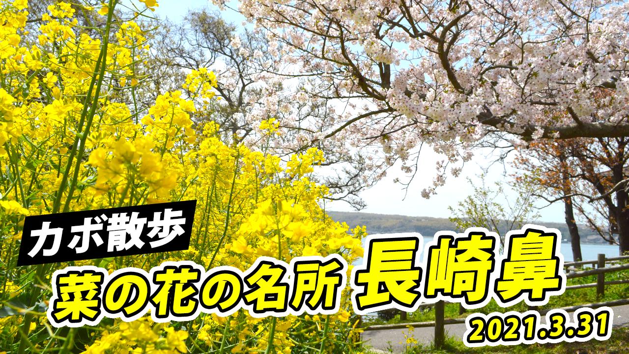 【カボ散歩】菜の花の名所/長崎鼻を大分ローカルタレントが歩く