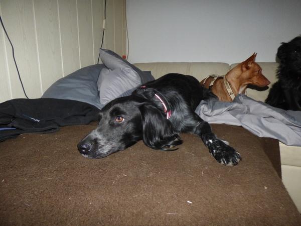 Dajo nach dem Spielen gemütlich auf der Couch abhängen