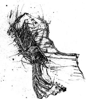 Günter Reich Zeichnung IV