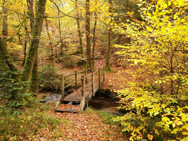 Randonnée le Bois des Boeufs à Bourganeuf ©bsavarypro