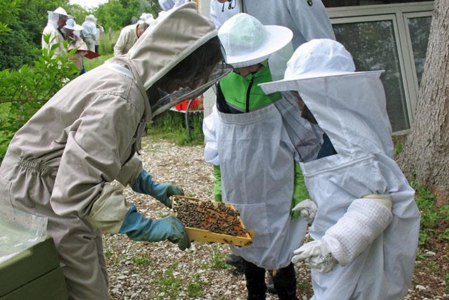 Beim Bienenlehrpfad in Börßum.