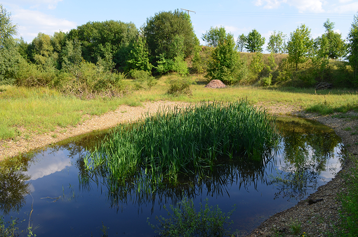 Amphibienlaichgewässer kurz nach dem Ausbaggern