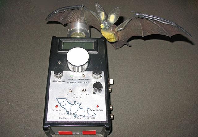 Der Fledermausdetektor
