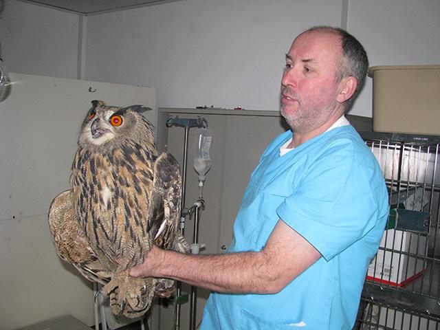 Dr. Jürgen Brinkmeier, Tierarzt in Wolfenbüttel, mit dem verletzten Uhu.