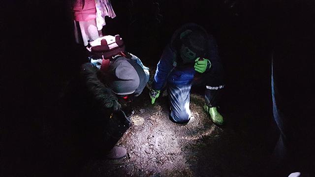 Auf Spurensuche nachts im Wald.