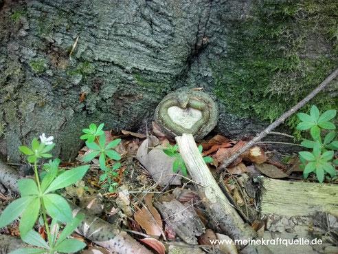 Baumherz, Naturliebe, Wunder der Natur, Kraftquelle
