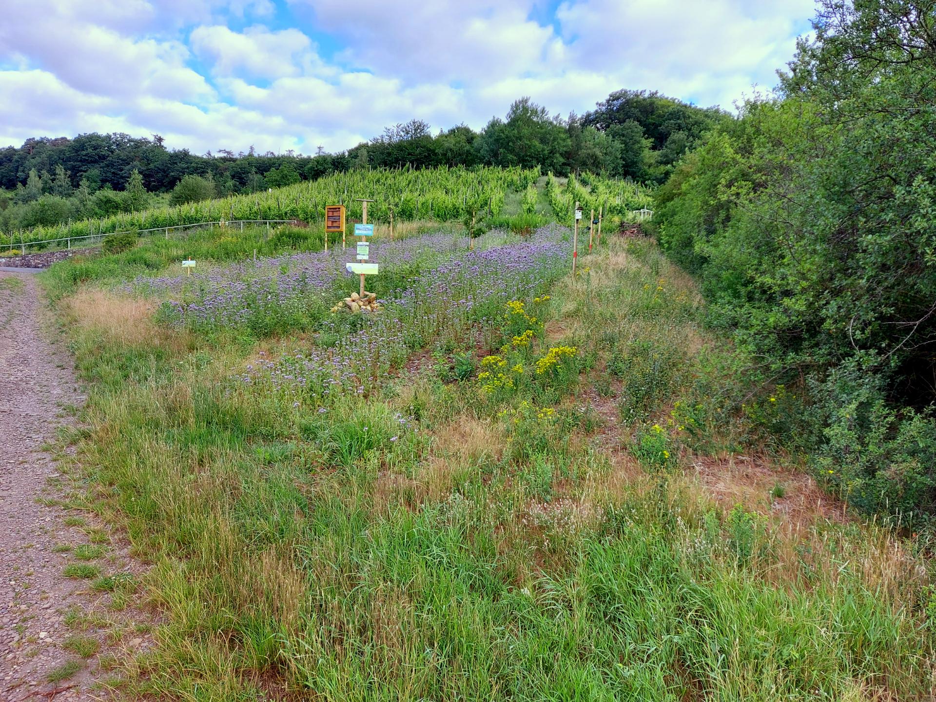 Naturerlebnisprojekt in Briedel mit Steinlinse, Rebhaufen, Insektenhotel und Saatmischung