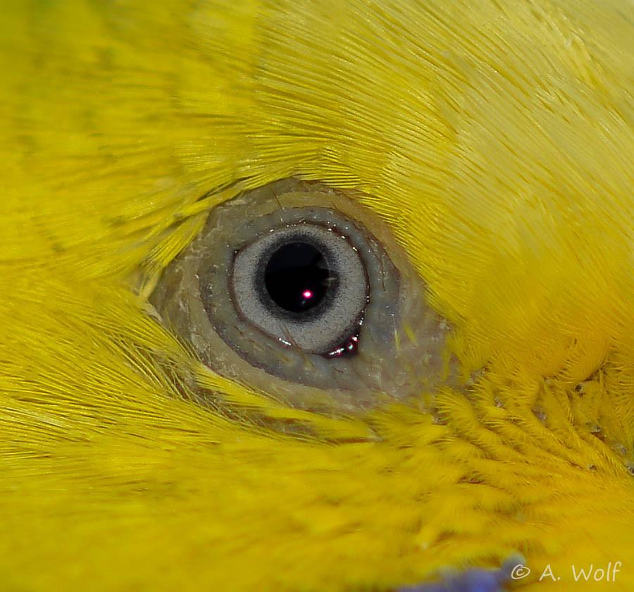 26.11.15 - Erstaunlich wie gut sich die Entzündung zurückgebildet hat. Das Auge sieht wieder fast normal aus. Es gibt nur noch eine kleine Schwellung.