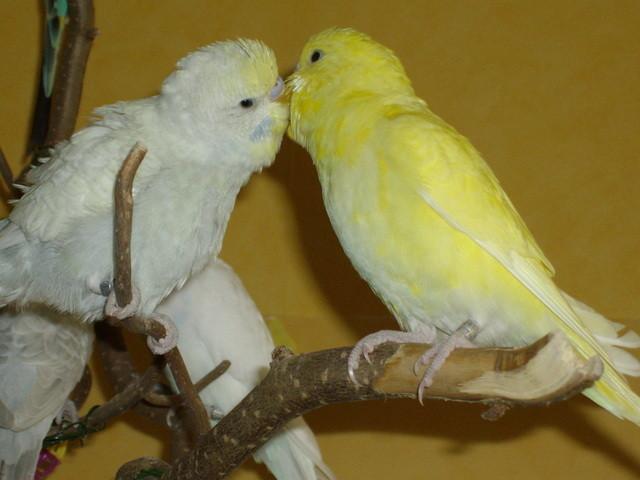 So sahen die beiden Verliebten aus, als sie hier einzogen.
