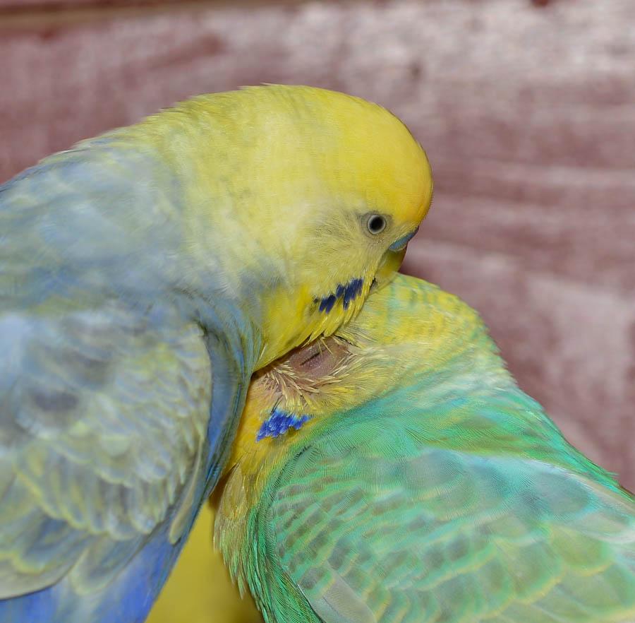 Angelo kümmerte sich immer sehr liebevoll um seine Queeny.