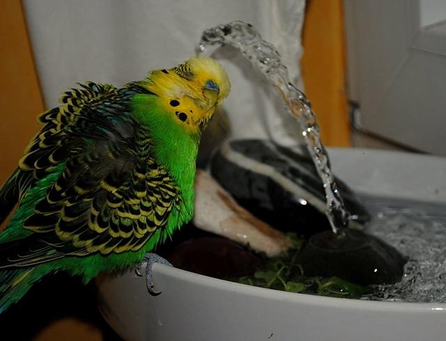 Sunny liebte das Plätschern des Wassers. Dabei hatte er großen Spaß!