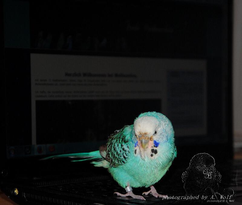 Klara auf meinem Laptop