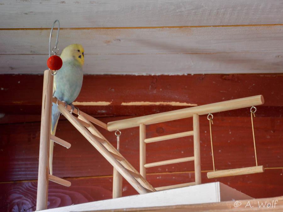 Der Bann des Neuen ist gebrochen und alle trauen sich auf das oberste Treppchen.