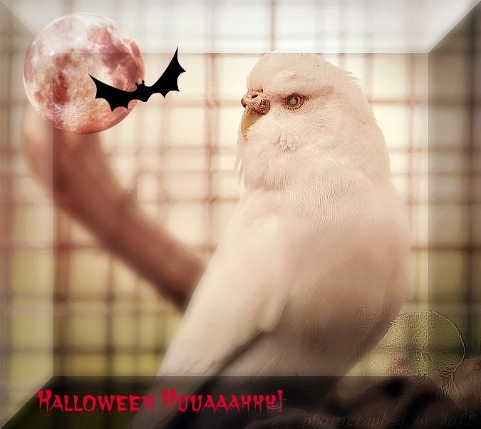Emily bereitet sich mental auf Halloween vor!