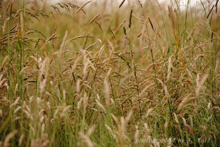 Gräser, Gräser, Gräser - im Überfluß. Der Sommer ist ein Paradies.