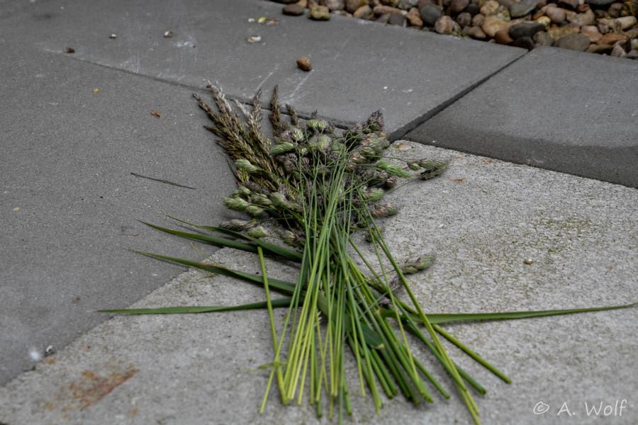 mehrere Wildgräsersträuße verteilte ich in der Voliere