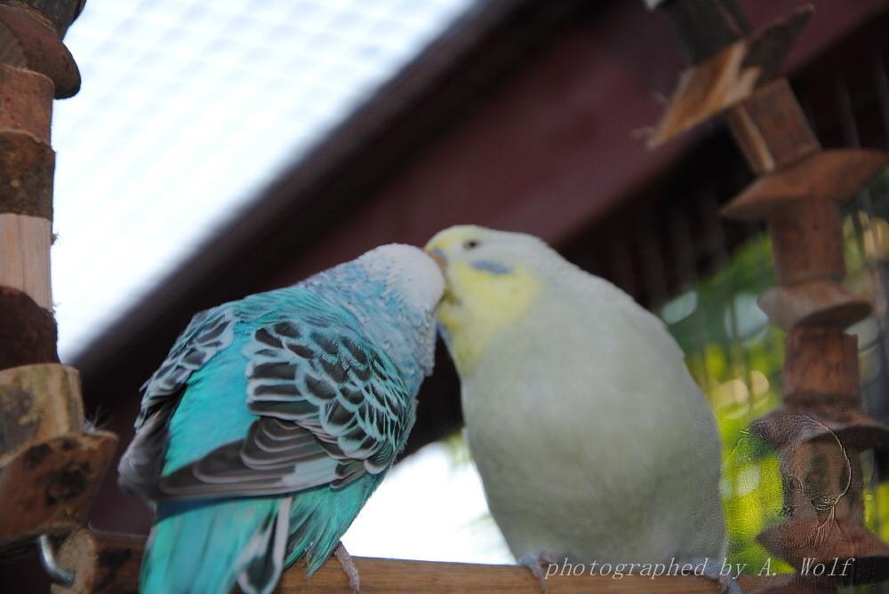 Wir können hier trainieren, ob wir beides gleichzeitig können - schaukeln UND küssen!