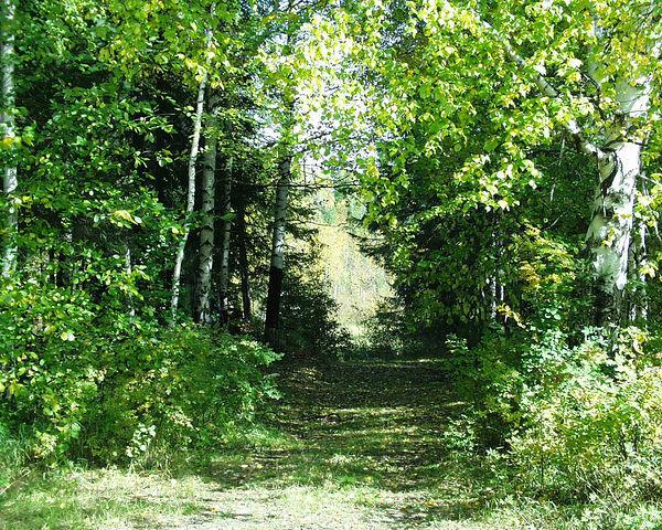 Дорожка в лесу за первым микрорайоном.