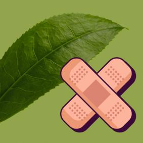 Propiedades medicinales del té