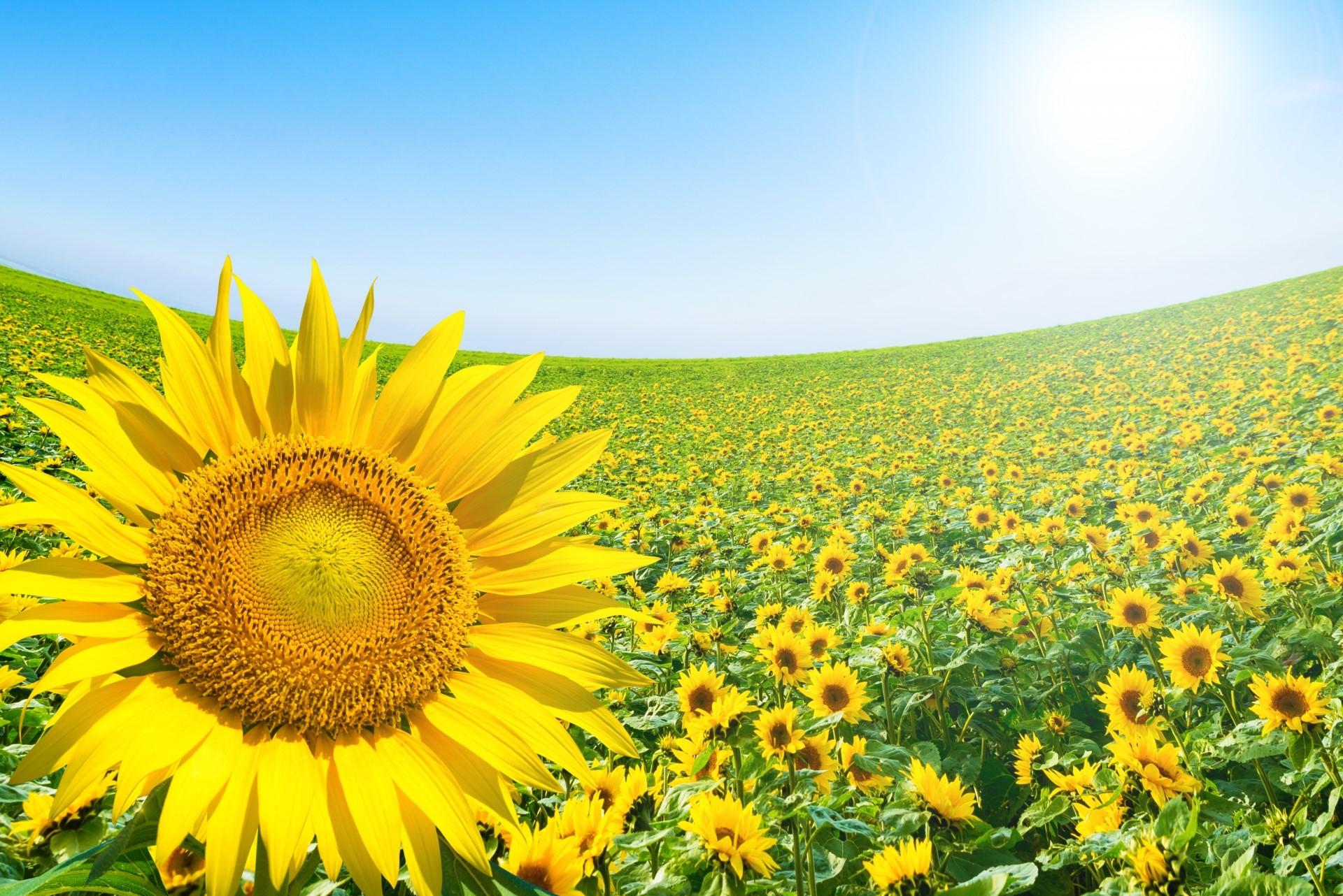 【夏の汗の対処法】
