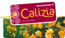 Calizia Pépinières Desprat, production en pépinières